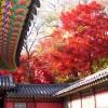 Ghé thăm Hàn Quốc ngập sắc lá đỏ mùa thu