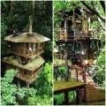 Nhà đẹp - Chiêm ngưỡng nhà cây tuyệt đẹp khắp thế giới