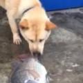 Clip Eva - Chú cún cố gắng tát nước cứu sống cá