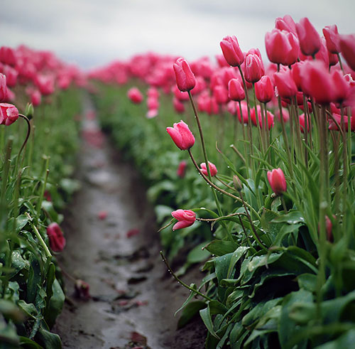 nhung con duong hoa dep nhat the gioi - 12