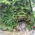 Nhà đẹp - Nhà 3 tầng phủ kín cây xanh độc đáo giữa thủ đô
