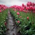 Xem & Đọc - Những con đường hoa đẹp nhất thế giới