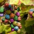Xem & Đọc - Lạ mắt những chùm nho bảy màu có thật trên thế giới