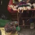 Tin tức - Giết mổ gia cầm tràn lan các chợ