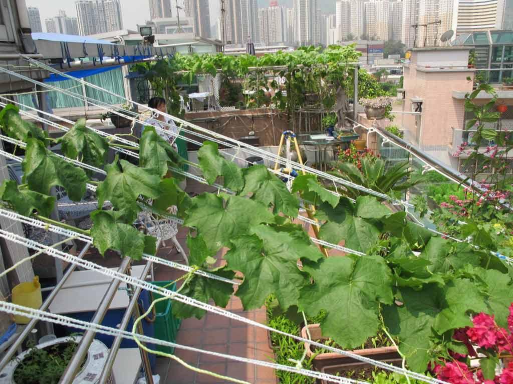 Vườn rau sân thượng của mẹ chồng Tina-5