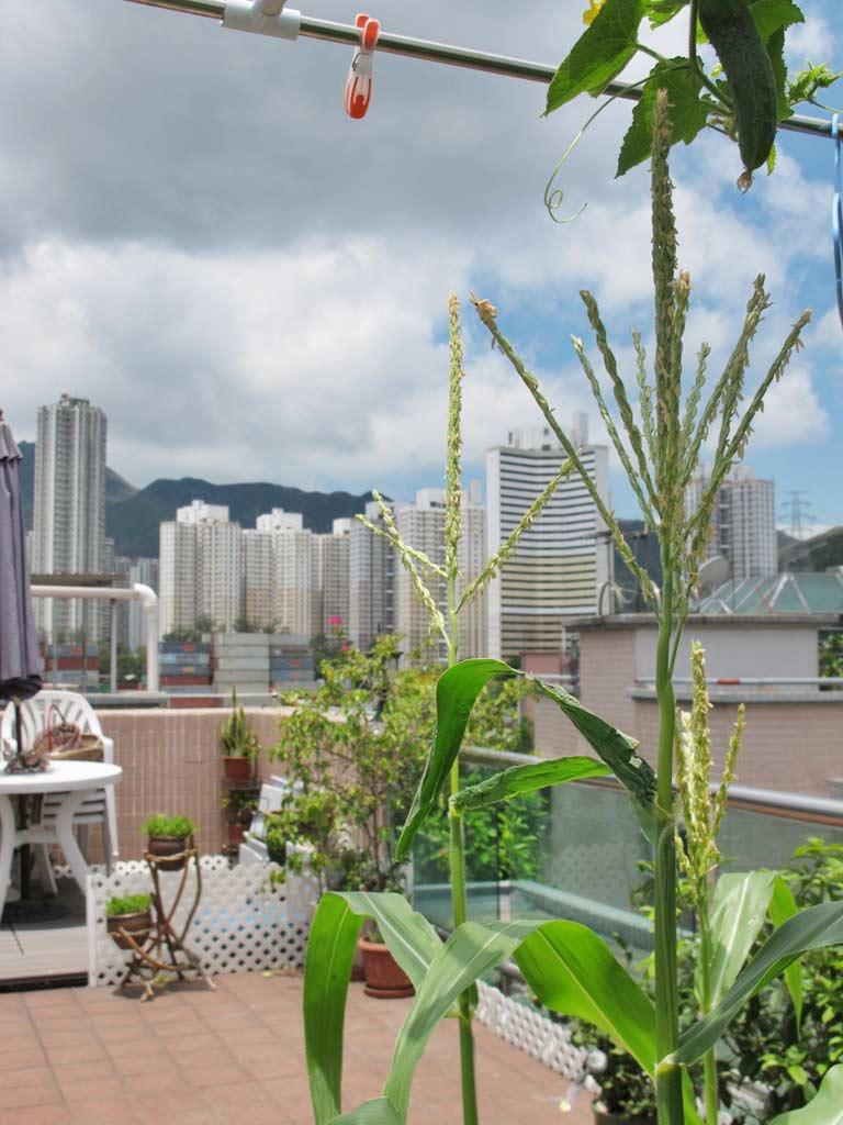 Vườn rau sân thượng của mẹ chồng Tina-8