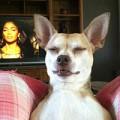 Xem & Đọc - Hài hước những bức ảnh chụp chó trùng hợp ngẫu nhiên