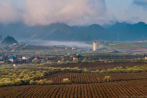 Vẻ đẹp mê hoặc của Mộc Châu trong sương sớm - 8