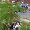 Tin tức - Những vụ cây gãy đổ gây thương vong cho người đi đường