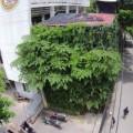 Mua sắm - Giá cả - Người Hà Nội chi 1,5 tỷ đồng phủ cây xanh kín nhà