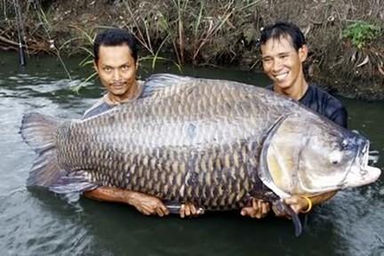 Kỳ công săn loài cá 'khôn ba năm, dại một giờ'-1