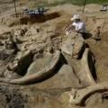 Tin tức - Phát hiện bộ xương khổng lồ của sinh vật thời kỷ băng hà