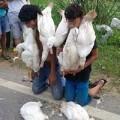 Tin tức - Bắt trẻ cắn vịt sống quỳ dưới đường vì ăn trộm