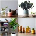 Nhà đẹp - Cách chọn và bố trí hoa, cây cảnh trong nhà
