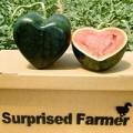 Đi đâu - Xem gì - Nghệ thuật đúc trái cây thành hình đặc biệt