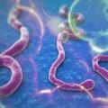 Tin tức - Ebola khó kiểm soát, số người chết tăng lên 1.900