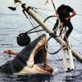 Clip Eva - Những chú cá bất ngờ tấn công thợ câu