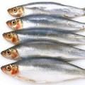 Sức khỏe - Ăn cá để bảo vệ thính lực