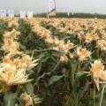Mua sắm - Giá cả - Bắp biến đổi gien: Vẫn còn băn khoăn