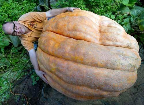 chiem nguong qua bi ngo khong lo nang 260kg - 6
