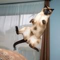Xem & Đọc - Cười vỡ bụng những bức ảnh chụp... mèo bay