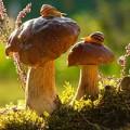Xem & Đọc - Muôn màu cuộc sống trong thế giới loài nấm