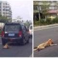 Tin tức - TQ: Phẫn nộ chú chó bị chủ buộc cổ, kéo lê trên đường