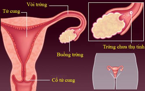 'Rõ từng milimet' quá trình thụ thai - 1