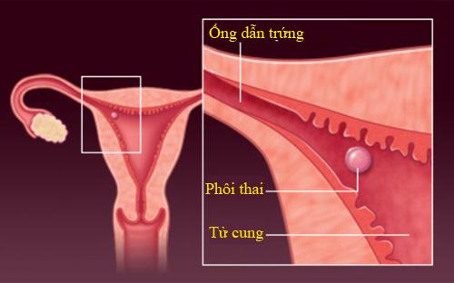 'Rõ từng milimet' quá trình thụ thai - 4