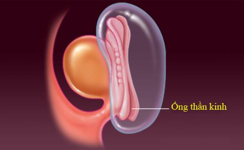 'Rõ từng milimet' quá trình thụ thai - 7