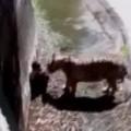 Clip Eva - Người đàn ông bị hổ cắn chết trong vườn thú