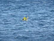 Tin hot - Con 10 tháng tuổi trôi ra biển vì bố mẹ mải tắm nắng