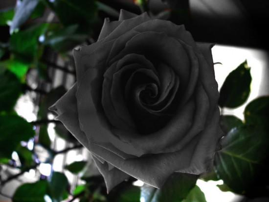 sot xinh xich trong hoa hong den no dung he - 5