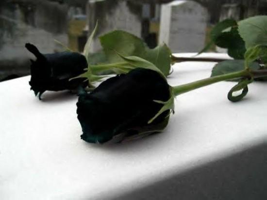 sot xinh xich trong hoa hong den no dung he - 2