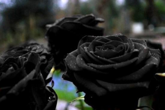 sot xinh xich trong hoa hong den no dung he - 3
