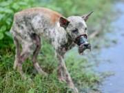 Tin nóng trong ngày - Giải cứu chú chó bị buộc mõm đến hoại tử ở Bến Tre
