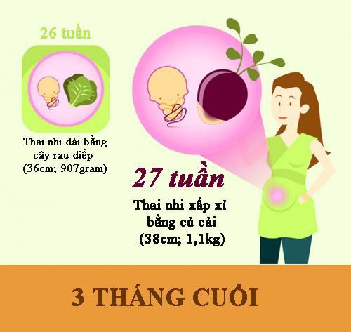 can nang, chieu dai chuan cua thai nhi theo tung tuan thai - 6