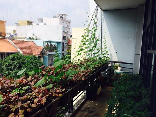 tp.hcm: van phong cho nhan vien thoa thue trong rau sach - 6