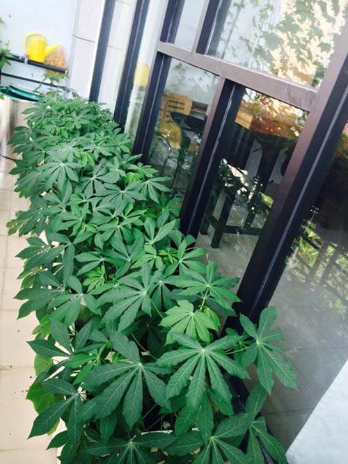 tp.hcm: van phong cho nhan vien thoa thue trong rau sach - 7