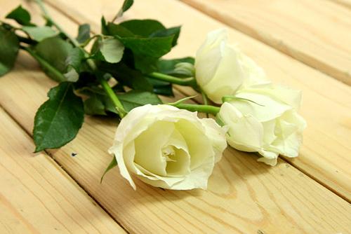 8 tieng 'trong' ra hoa hong xanh dep mat - 2