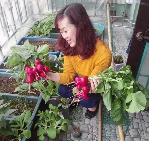 Củ cải đỏ trồng chậu trong 1 tháng cho bé tha hồ ăn-1