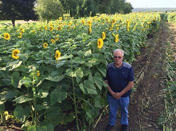 Ông lão trồng 6km hoa hướng dương để tưởng nhớ vợ quá cố-2