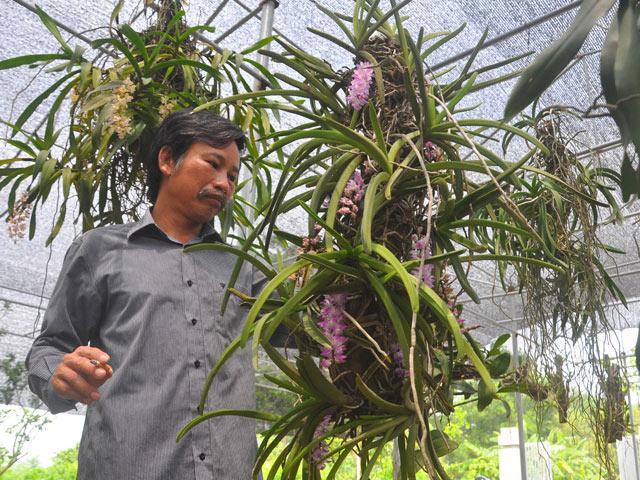 bi quyet trong lan bach vi ho ra hoa dep nhu y cua ty phu ha thanh - 1