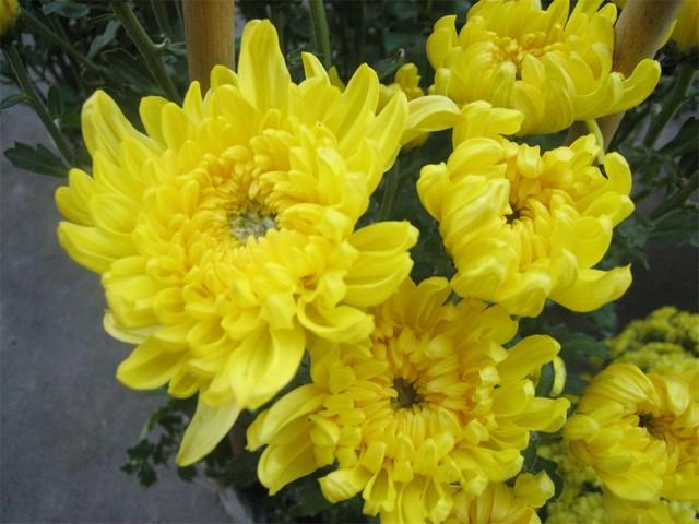 Những loại hoa nào không dâng cúng trên bàn thờ?-3