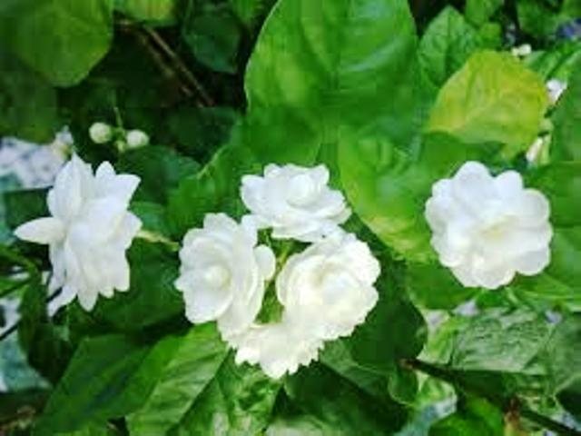 Những loại hoa nào không dâng cúng trên bàn thờ?-4