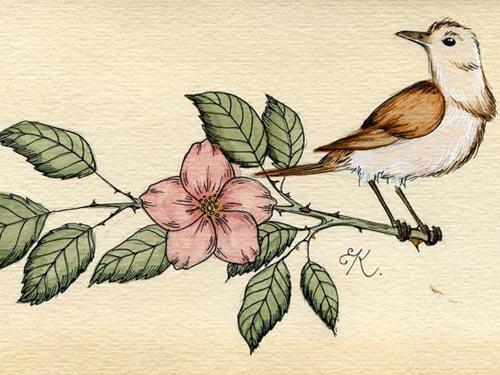truyen co tich: chim son ca - 1