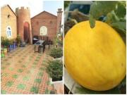 Không gian đẹp - Mẹ đảm trồng rau sạch giữ gìn hạnh phúc gia đình