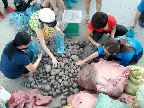 nguoi ha noi mua khoai lang ung ho nong dan vinh long - 3
