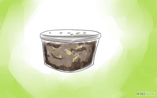 mach ban cach trong cherry sai triu qua tai nha - 4