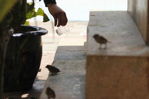 cai chet bi thuong cua chim phong sinh mua vu lan - 5